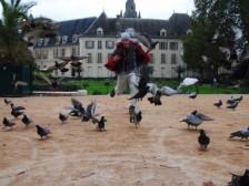 Palko naháňa holubov